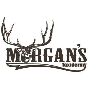 morgans-taxidermy