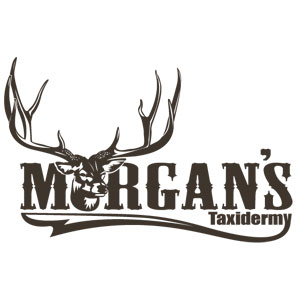 morgans-taxidermy